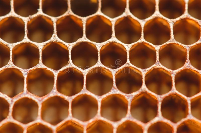 Honeycomb close up macro background stock images