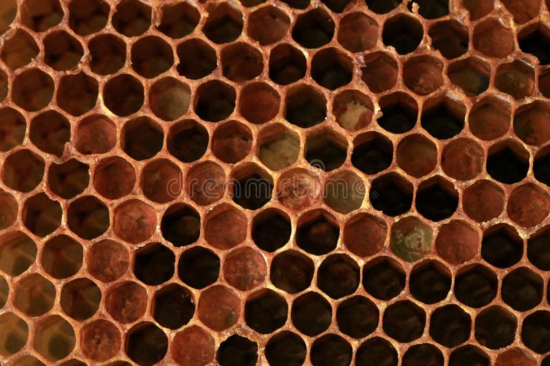 Honeycomb with colorful perga. stock image