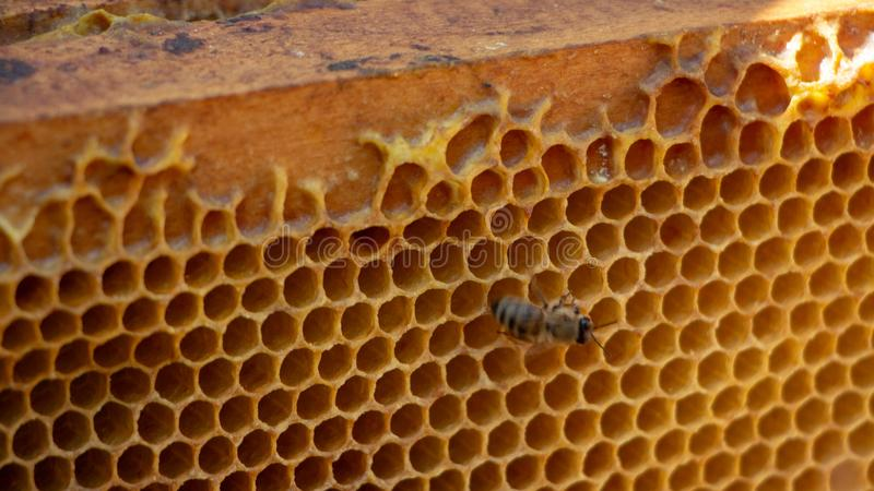 Honeycomb with honey. macro shot texture close up royalty free stock photography