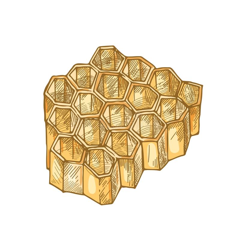 Honeycomb isolated on white background. Hexagonal prismatic wax cells built by bees for honey storage. Decorative design royalty free illustration