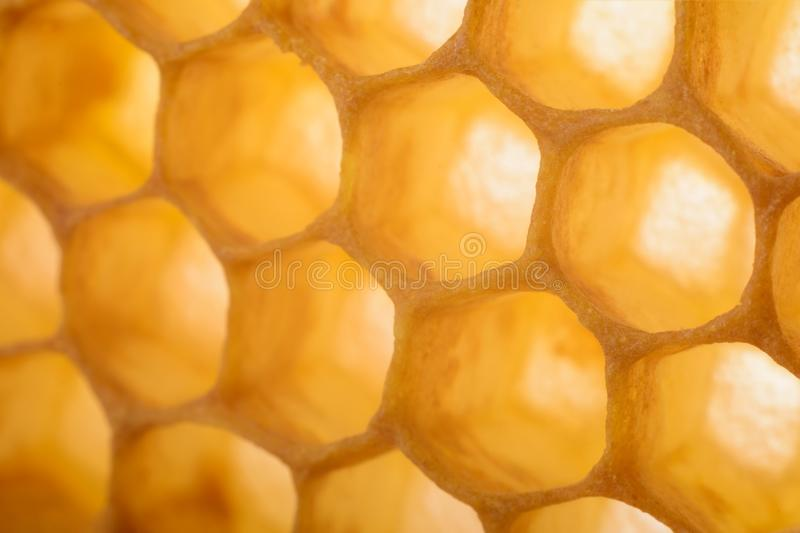 Honeycomb macro as a background. Beekeeping products. Apitherapy. stock photos
