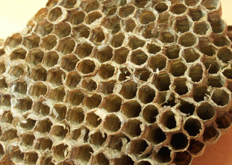 Honeycomb macro detail stock images