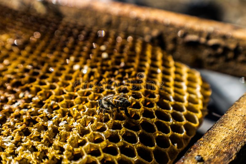 Honeycomb macro. Shot made in bee farms producing honey for human consumption royalty free stock photo