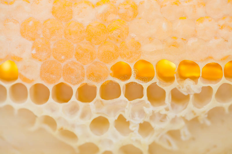 Honeycomb macro view. Unfinished golden honey stock images