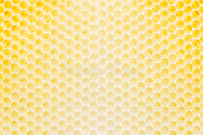 Honeycomb pattern. Pattern of the honeycomb for background material royalty free stock photo