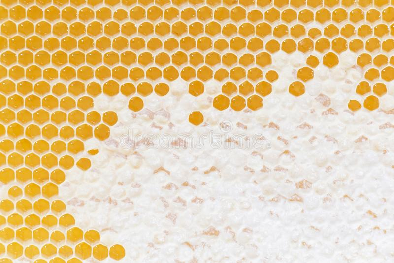 Honeycomb pattern. Hexagonal texture. Abstract pattern background. Honeycomb. Golden, background. Honeycomb pattern. Hexagonal texture. Abstract pattern royalty free stock photography