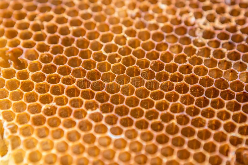 Honeycomb pattern texture background. Close up of honeycomb pattern texture background stock image
