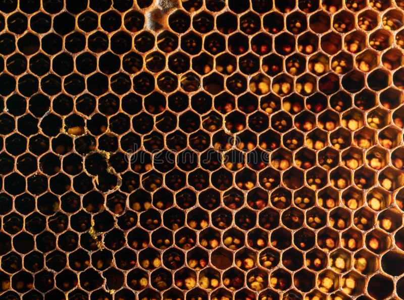 Honeycomb Texture Sweet nectar not yet extracted from the honeycomb. Background of honeycombs in dark golden hues. Macro shooting royalty free stock photo