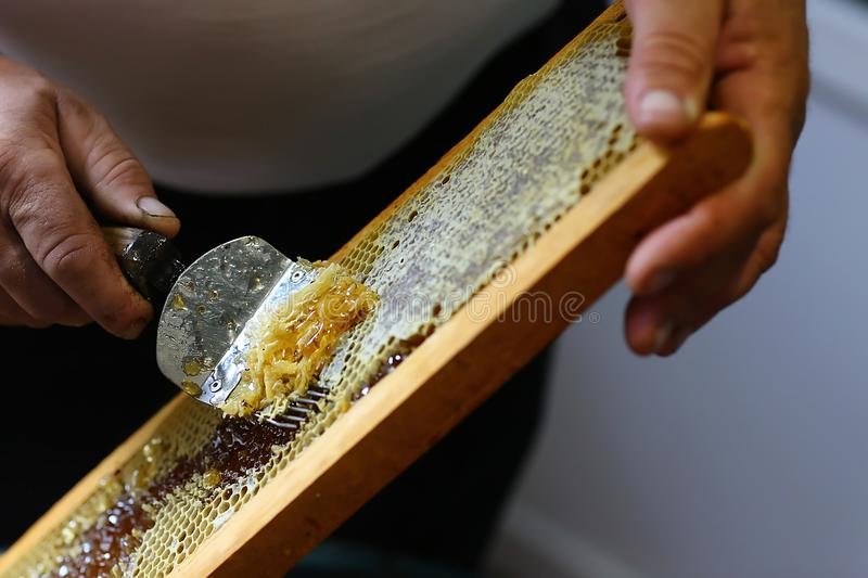 Honeycomb with uncapping fork. Raw honey being harvested from bee hives. Beekeeping concept.  stock photography