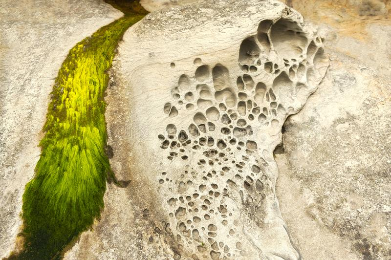 Honeycomb Weathering in Sandstone Rock On A Beach in the San Juan Islands. stock photos