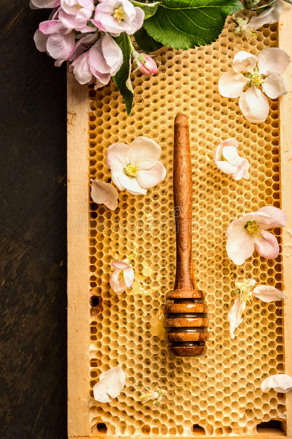 Honeycomb with wooden dipper and summer aple blossom stock photo