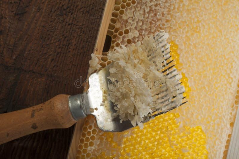 honeycomb z uncapping rozwidlenie obrazy stock