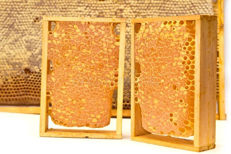 Honeycombs isolated on white stock photo