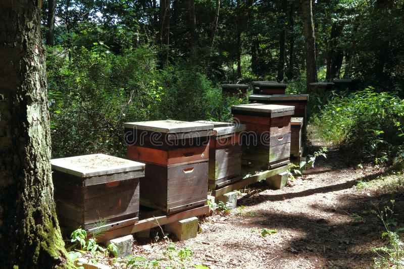 Honeycombs in the forest stock photos
