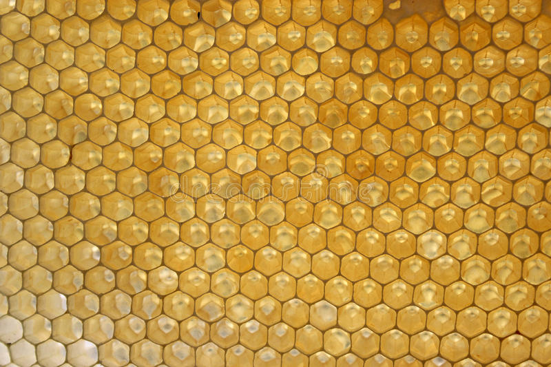 Honeycombs in hive. Honeycombs built by bees in my hive stock images