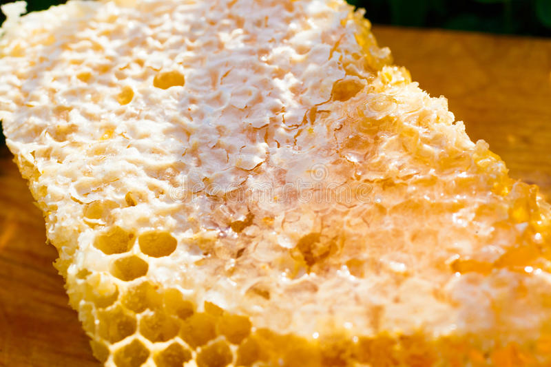 Honeycombs with honey royalty free stock photos