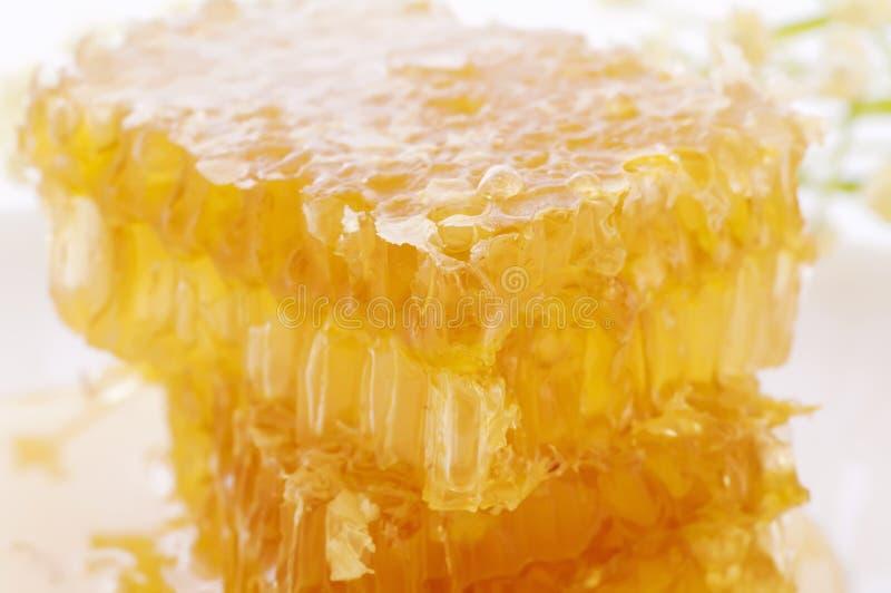 honeycomp στοκ φωτογραφίες με δικαίωμα ελεύθερης χρήσης