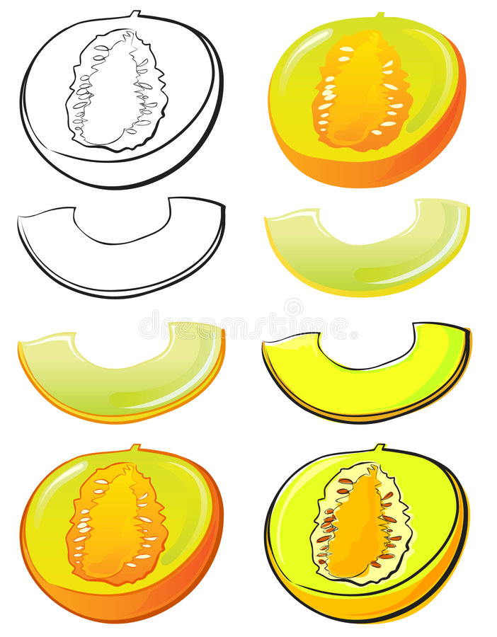 Download Honeydew melon stock vector. Illustration of nature, fruit - 6808343