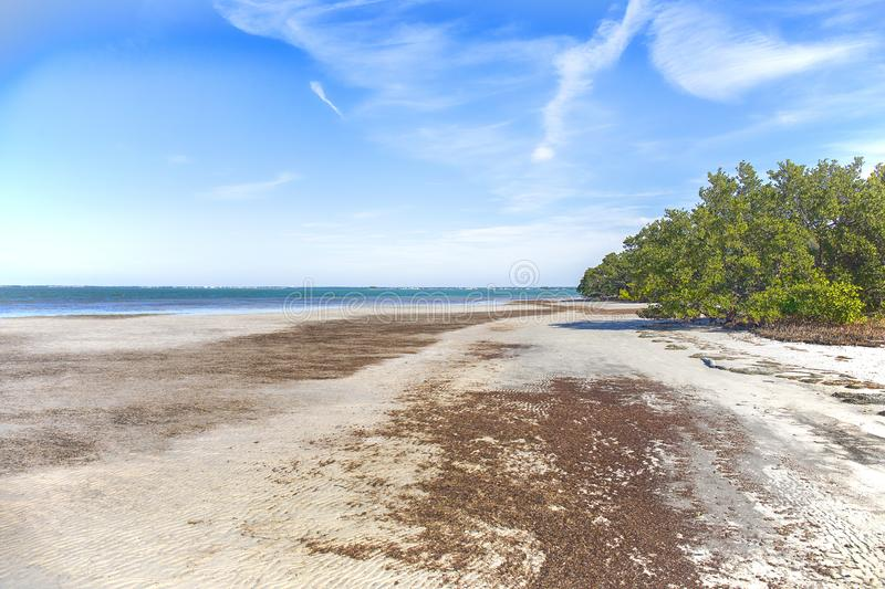 Honeymoon Island Secluded Beach royalty free stock images