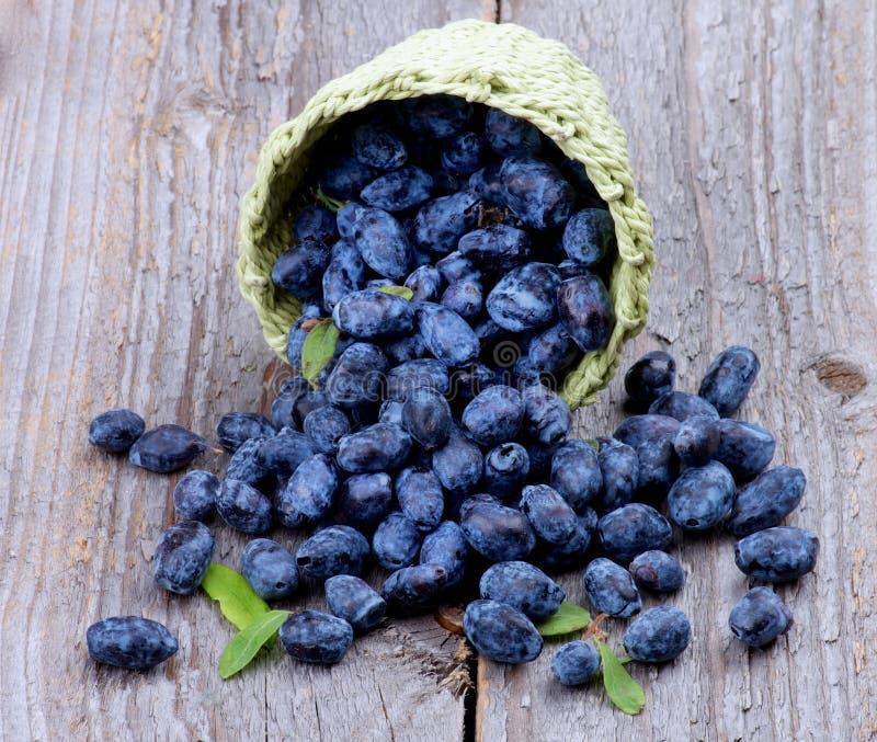 Honeysuckle Berries royaltyfria foton