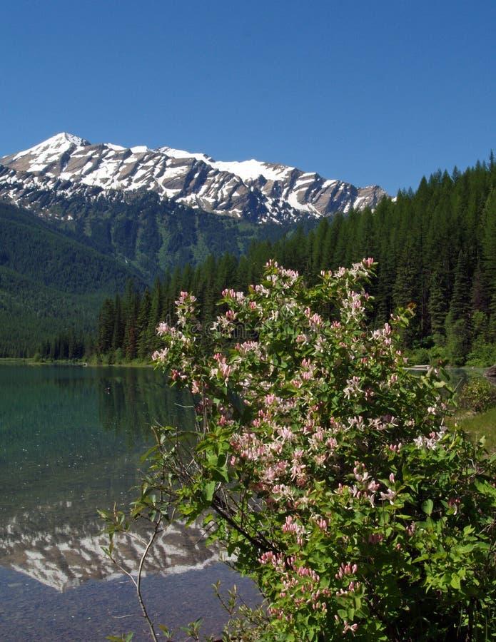 Honeysuckles, Lake, Mountain royalty free stock images