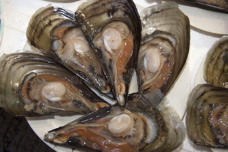 Hong Kong Abalone foto de stock royalty free
