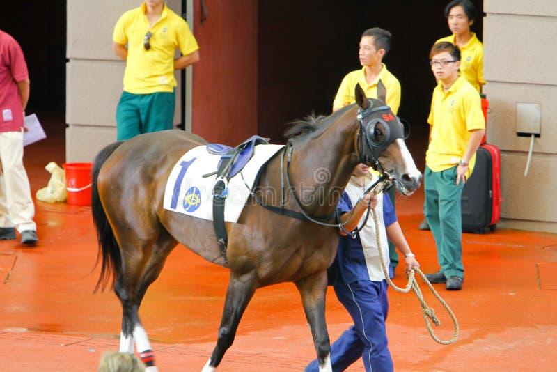 HONG KONG, CHINA - der Sha Tin Racecourse lizenzfreie stockfotografie