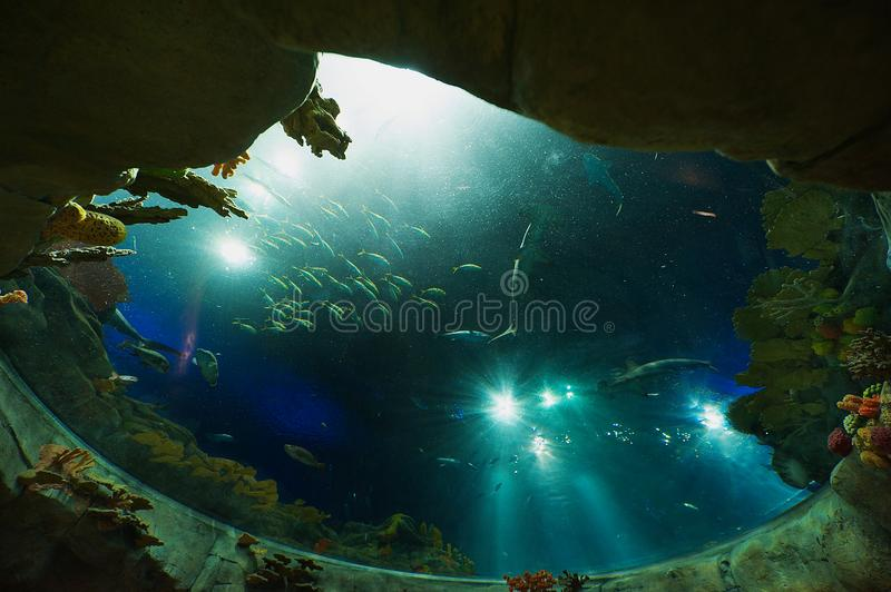Sharks and fish in a huge aquarium in the Ocean Park in Hong Kong, China. royalty free stock photo