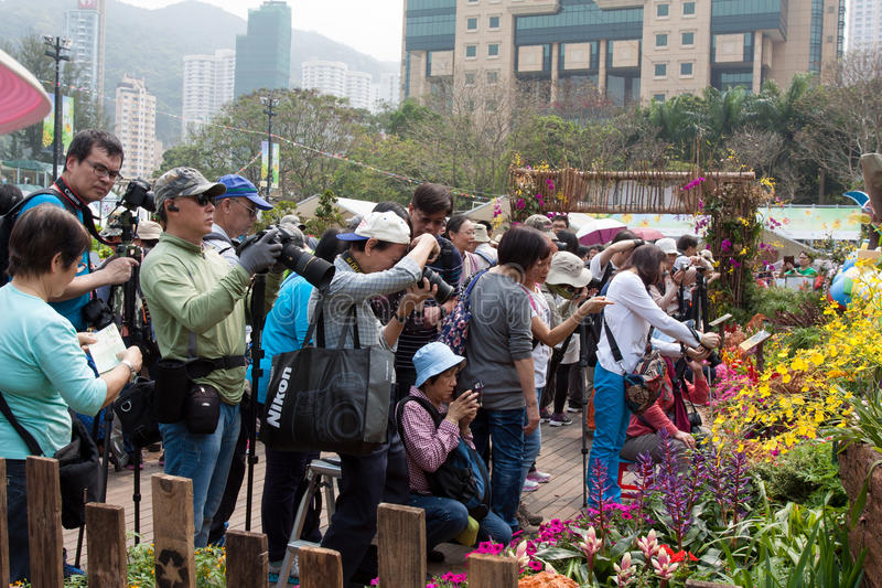 Hong Kong Flower Show royaltyfri fotografi