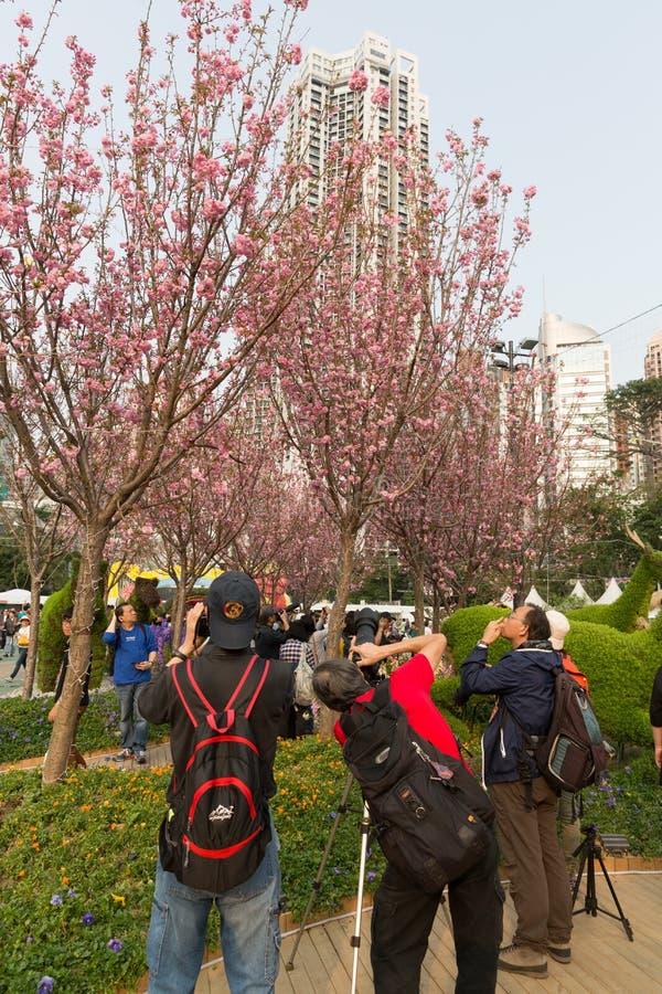 Hong Kong Flower Show 2019 arkivfoto