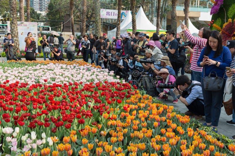 Hong Kong Flower Show 2019 arkivbild