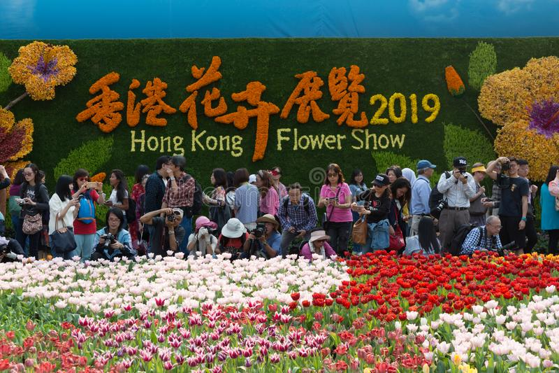 Hong Kong Flower Show 2019 fotografering för bildbyråer