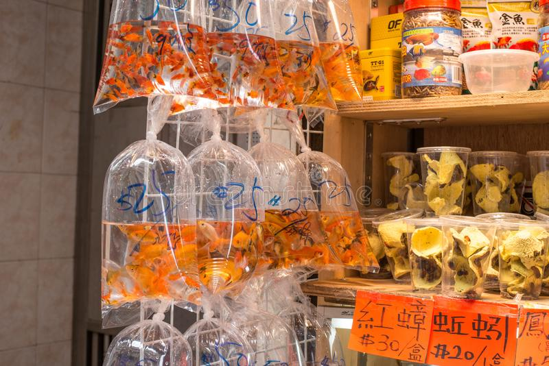 Hong Kong selling insect and Gold fish in poly bags royalty free stock image