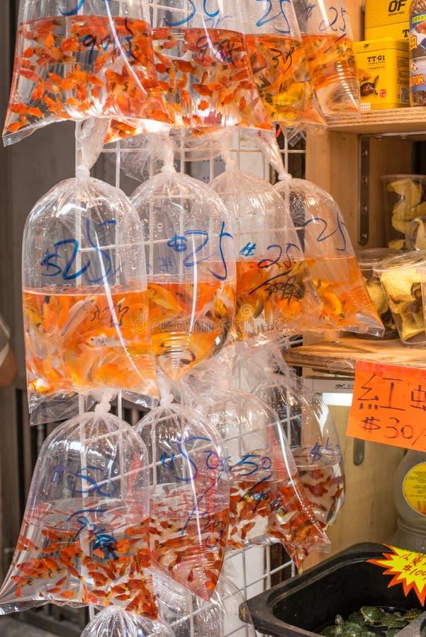Hong Kong som säljer den guld- fisken i poly påsar arkivbilder