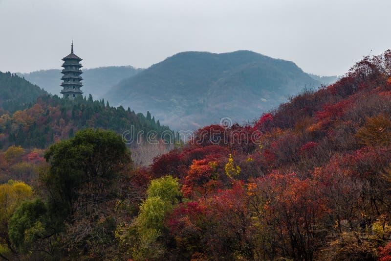 Hong Ye Gu oder rotes Blatttal im Herbst, Jinan stockfotos