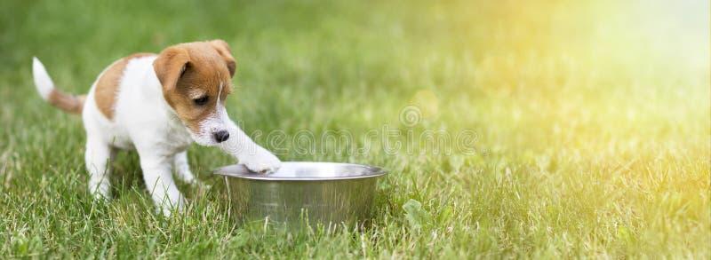 Hongerig hondpuppy die op zijn voedsel wachten royalty-vrije stock fotografie