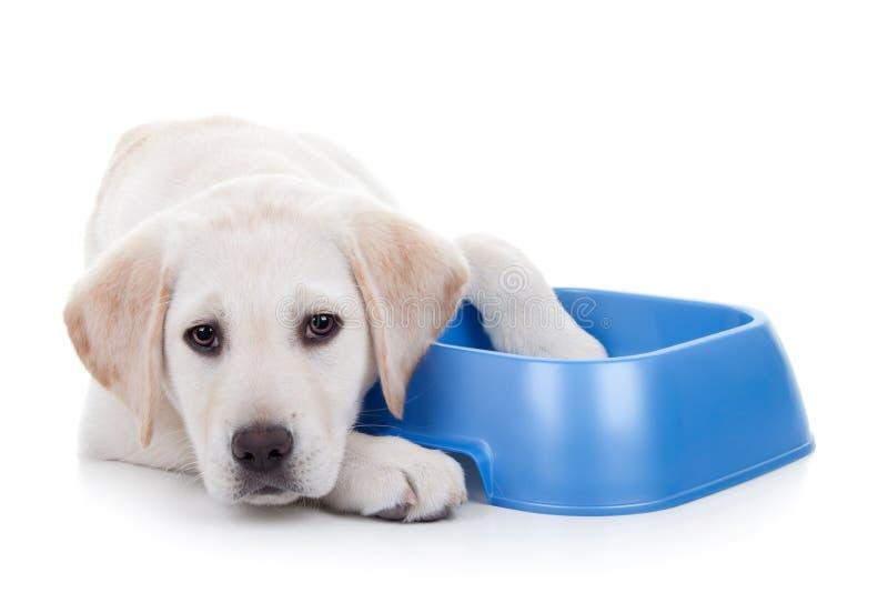 Hongerige Hond stock afbeeldingen