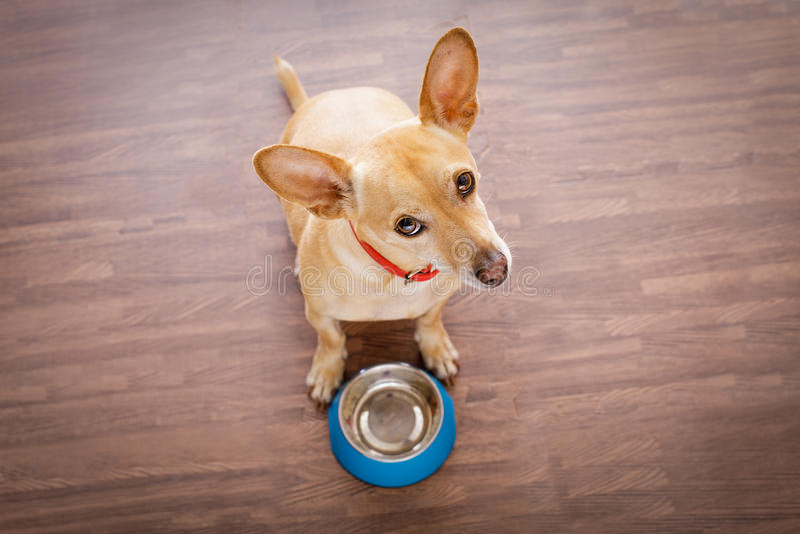 Hongerige hond met voedselkom royalty-vrije stock afbeeldingen