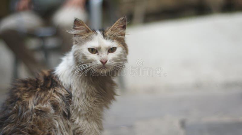 Hongerige kat die wat voedsel zoeken royalty-vrije stock foto's
