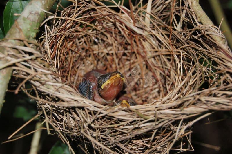 Hongerige vogel stock fotografie
