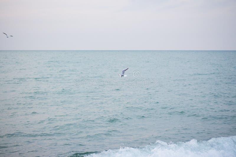 Download Hongerige Zeemeeuwen Die In Het Overzees Duiken Stock Foto - Afbeelding bestaande uit marine, vlucht: 107700426