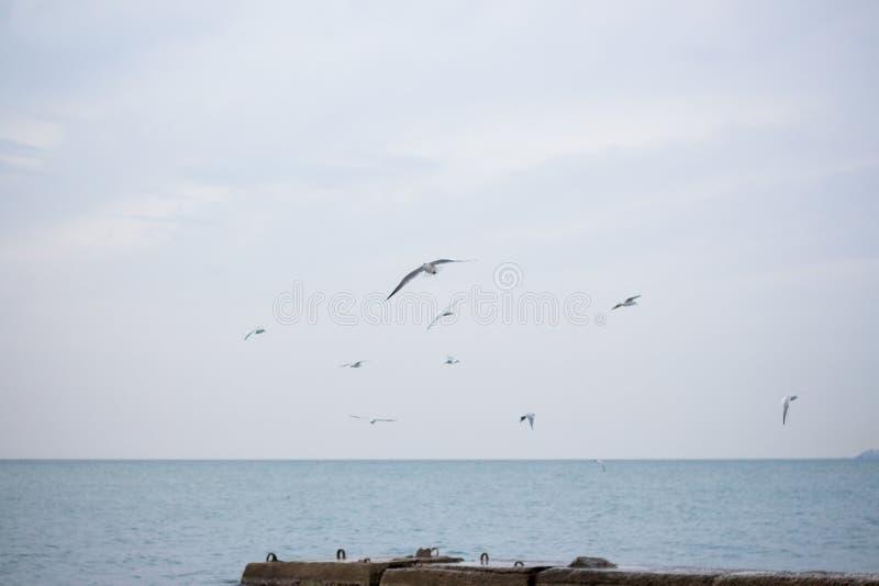Download Hongerige Zeemeeuwen Die In Het Overzees Duiken Stock Foto - Afbeelding bestaande uit vogel, marine: 107700574