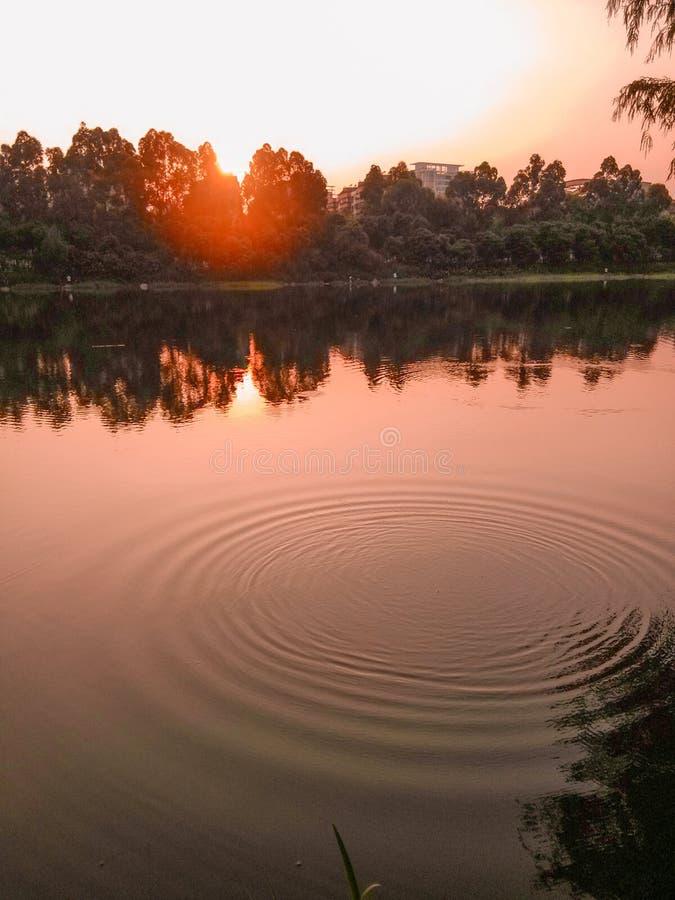 Honghu scenery. The twilight of honghu park, tranquility stock photography
