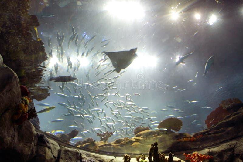Hongkong: Oceaan Park royalty-vrije stock afbeelding