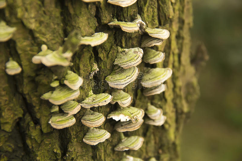 Hongo del árbol foto de archivo libre de regalías