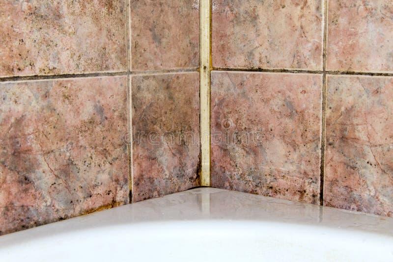 Hongo en el cuarto de baño foto de archivo