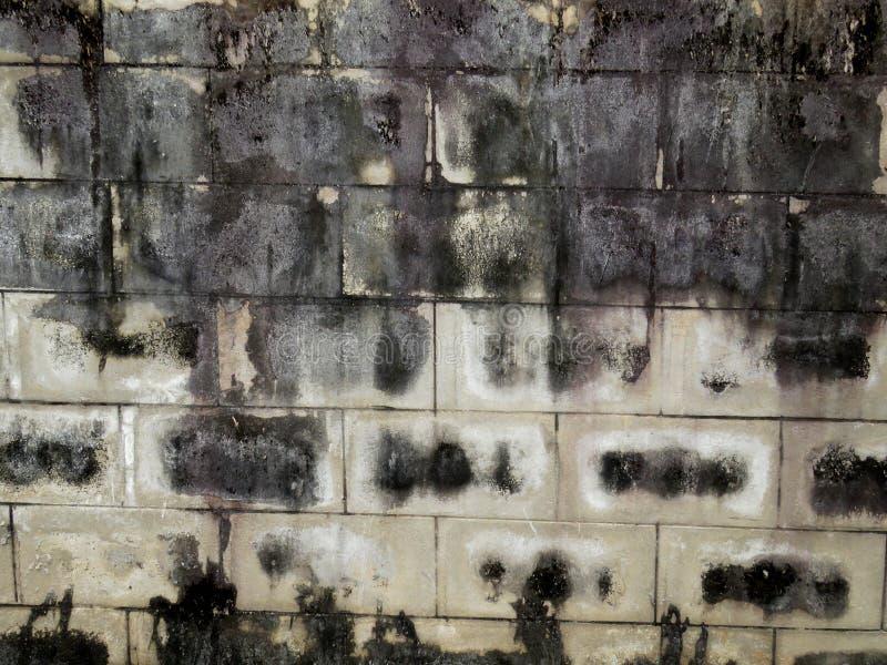 Hongo en la pared imagen de archivo libre de regalías