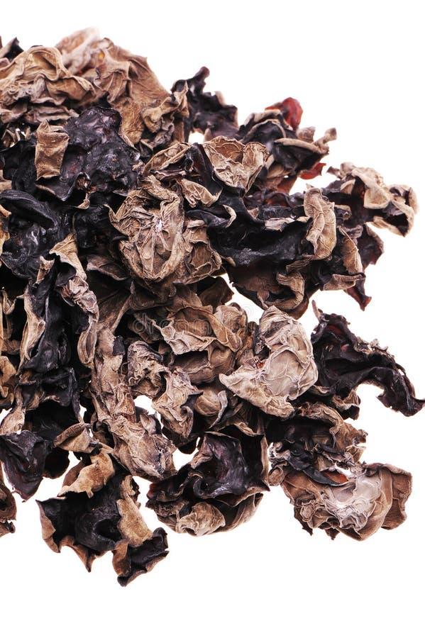 Hongo negro imágenes de archivo libres de regalías