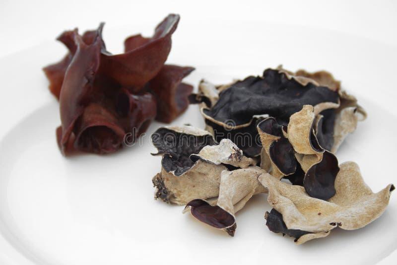 Hongo negro imagen de archivo libre de regalías