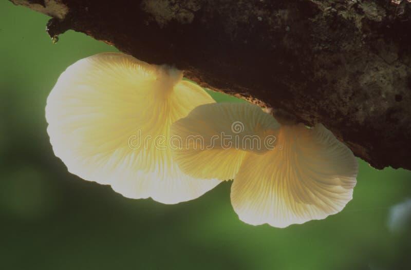 Download Hongos foto de archivo. Imagen de cubo, macro, hongos, círculo - 75018